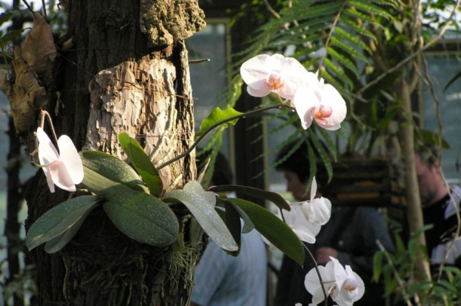 Эпифиты в дикой природе